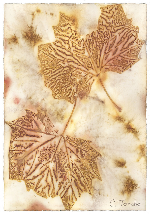 London Plane leaves ecoprint