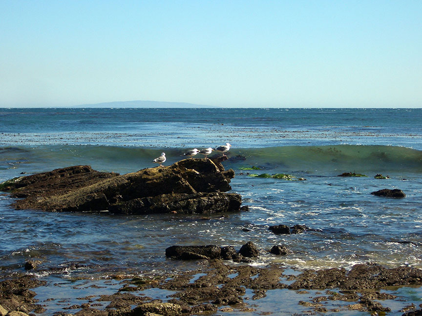 Seagulls at Point Dume Beach in Malibu