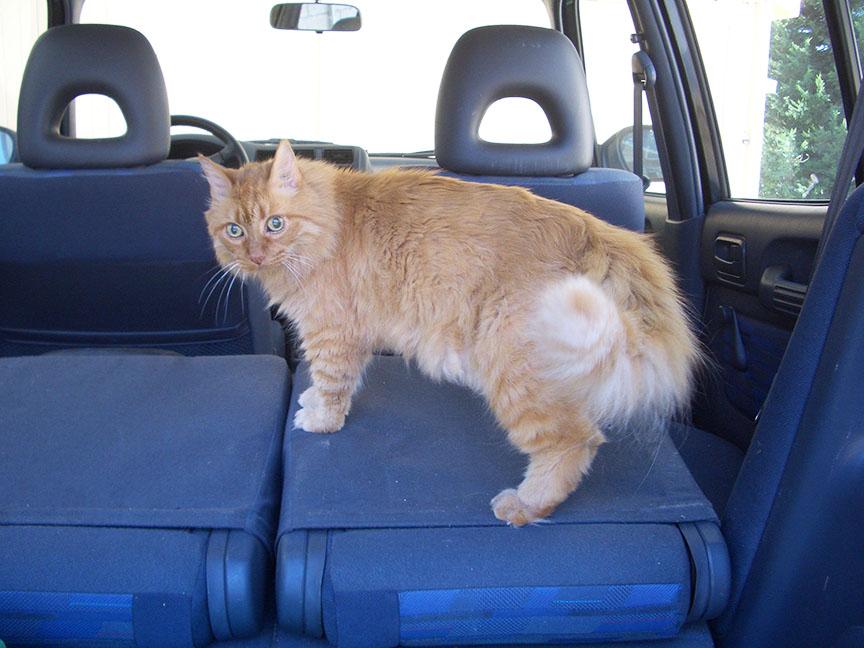 Nelson in car