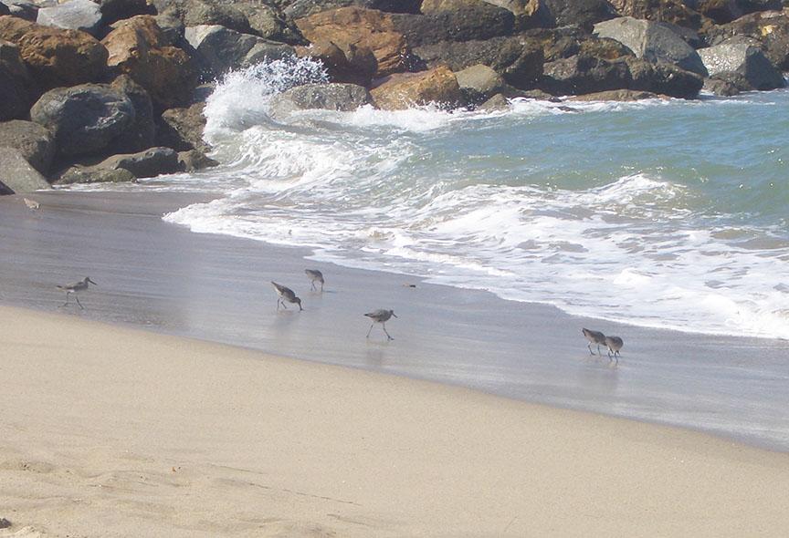Ventura Harbor Beach