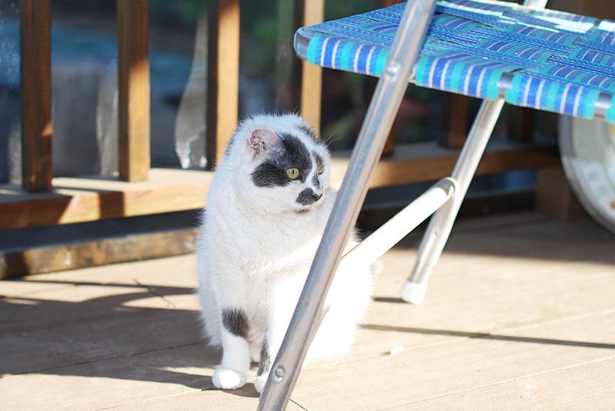 Alex cat on deck