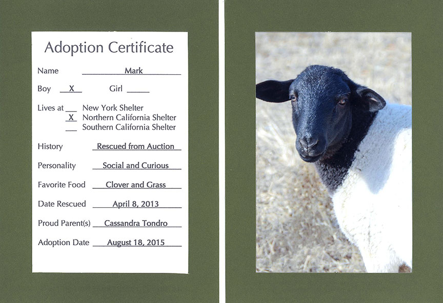 Mark - sheep Farm Sanctuary