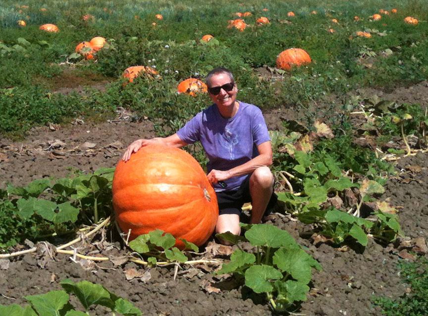 Pumpkin fields Ventura