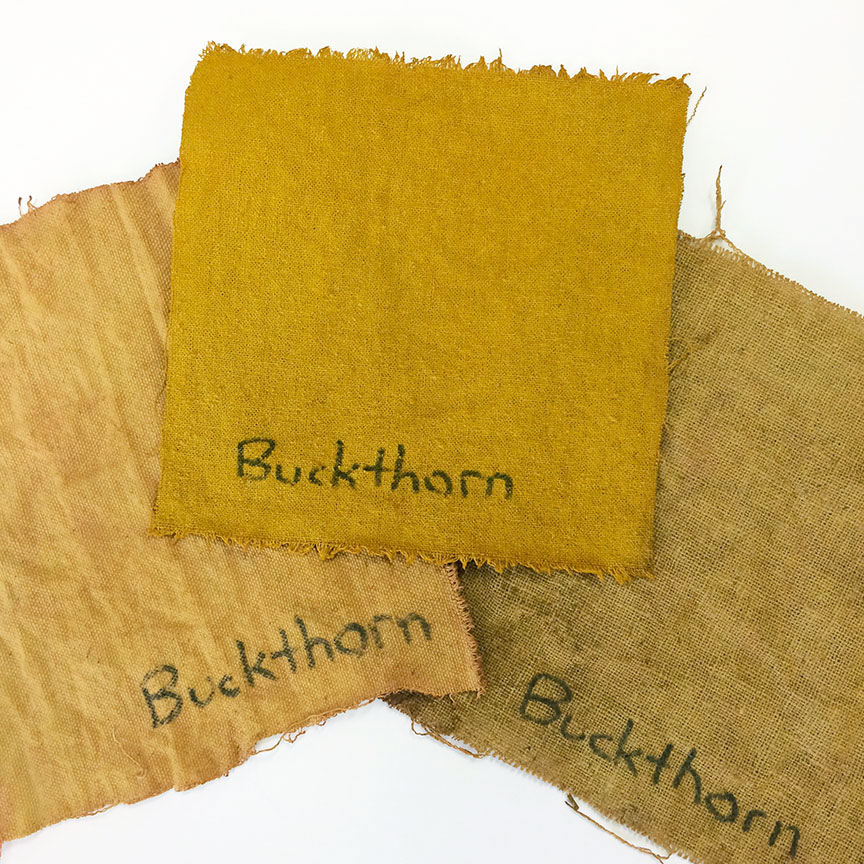 Buckthorn Bark natural dye